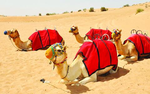 Desert Safari best place